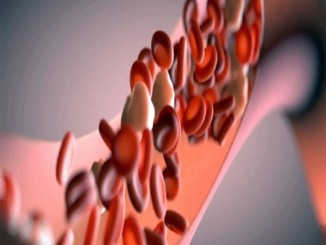 All You Need to Know About Blood Vessels