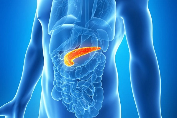 Endocrine System Functions, Facts & Diseases